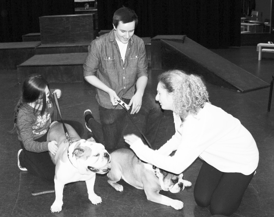 Glenbrook South students Julia Packer (left) and David Sucher (middle) work alongside sophomore Katie Snyder as they practice rehearsing with Mojo (left) and Yoyo. At rehearsal on March 20 all of the actors practiced running through their scenes with the dogs present. Photo by Lauren Sulkowski.